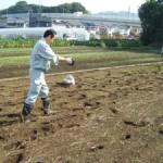 肥料まき2